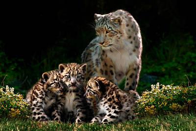 Snow Leopard And Cubs Art Print by Julie L Hoddinott