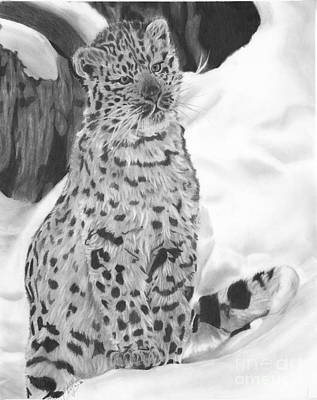 Drawing - Snow Leopard by Christian Conner