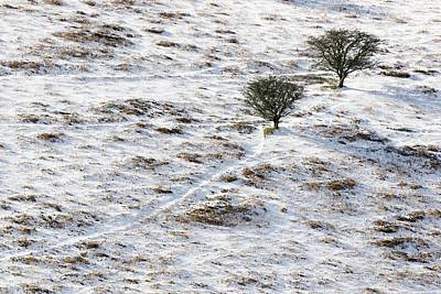 Snow On Moorland Print by Adrian Bicker
