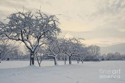 Photograph - Snow Trees by Jutta Maria Pusl