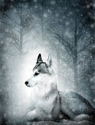 Woodland Mixed Media - Snow Wolf by Svetlana Sewell