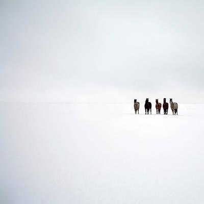 Cold Temperature Photograph - Snowblind by Jo Bradford / Green Island Art Studios