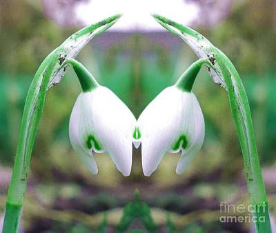 Snowdrops Original by John Chatterley