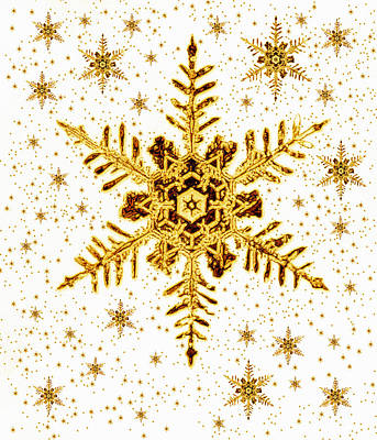 Photograph - Snowflakes by Mehau Kulyk