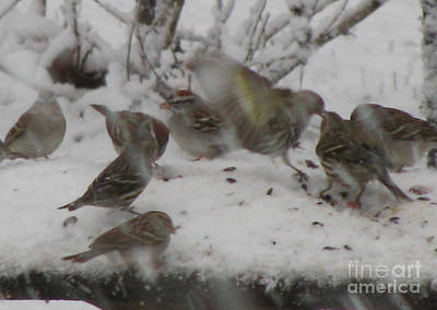 Photograph - Snowing And Hungry by Donna Brown