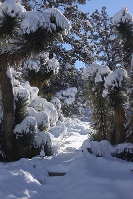 Photograph - Snowscape Three by Scott Brown
