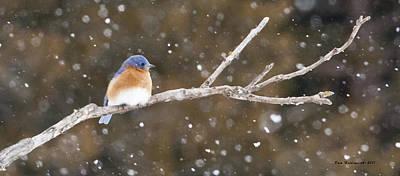Snowy Bluebird Art Print