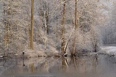 Photograph - Snowy Branches by Ann Bridges
