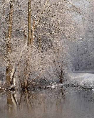 Photograph - Snowy Branches Two by Ann Bridges