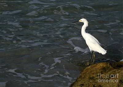 Photograph - Snowy Egret By The Sea by Sabrina L Ryan