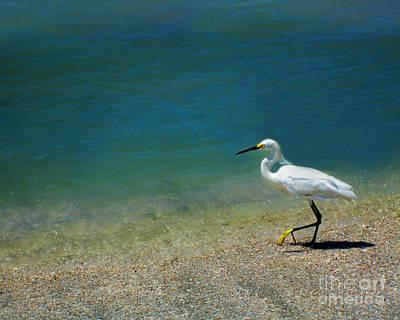 Photograph - Snowy Egret by Danuta Bennett