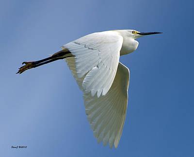 Snowy Egret Fly-by Art Print by Stephen  Johnson