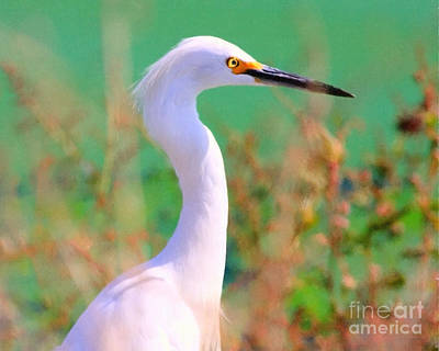 Snowy Egret . Painterly Art Print by Wingsdomain Art and Photography