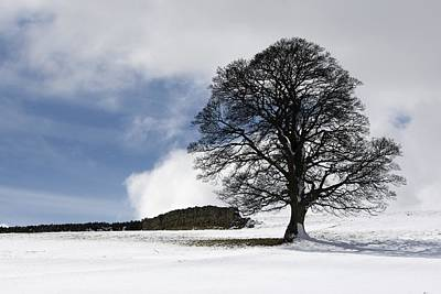 Snowy Field And Tree Art Print by John Short