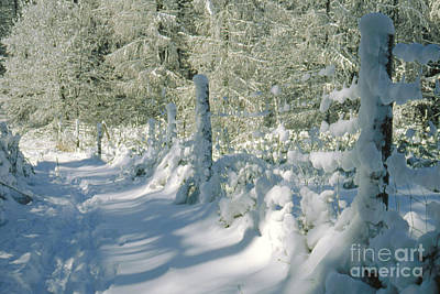 Snowbound Photograph - Snowy Footpath In Winter Wonderland by Heiko Koehrer-Wagner