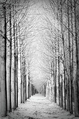 Cold Temperature Photograph - Snowy Forest by by Rafael Zwiegincew