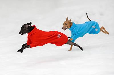 Greyhound Photograph - Snowy Fun by Ari Salmela