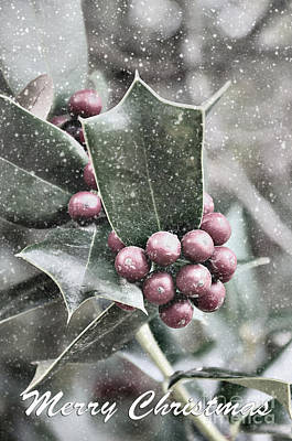 Photograph - Snowy Holly Christmas Card by Jim And Emily Bush