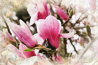 Photograph - Snowy Magnoila Mist  by Andee Design