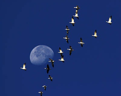 Photograph - Snowy Moon by Tony Beck