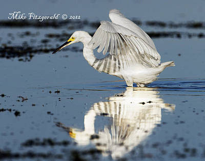Photograph - Snowy Morning Reflection by Mike Fitzgerald