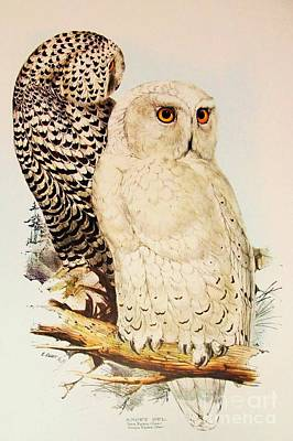 Painting - Snowy Owl by Pg Reproductions