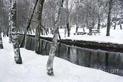 Snowy Park Print by Carlos Caetano