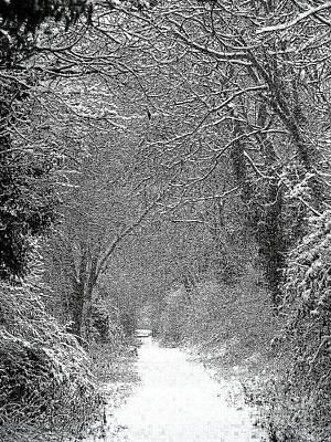 Snowy Path Art Print by Linsey Williams