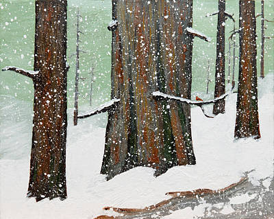 Snowy Redwood Art Print