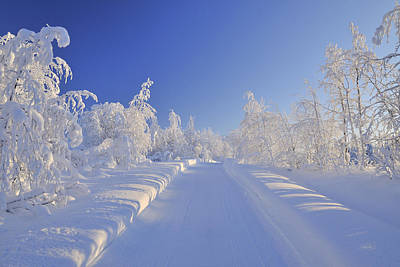 Bleached Tree Photograph - Snowy Road, Liikasenvaara, Northern Ostrobothnia, Finland by Raimund Linke