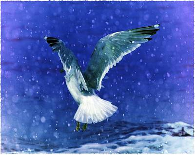 Snowy Seagull Art Print by Debra  Miller
