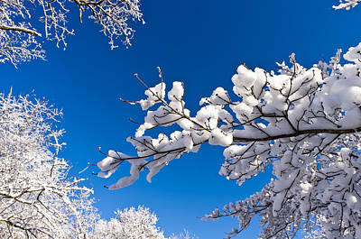 Photograph - Snowy Trees And Blue Sky by Lori Coleman