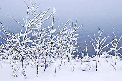 Snowstorm Photograph - Snowy Trees by Elena Elisseeva
