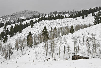 Landscapes Royalty-Free and Rights-Managed Images - Snowy Wilderness by Wes and Dotty Weber