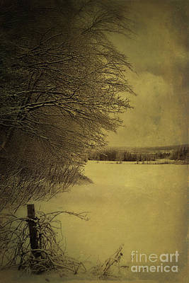 Photograph - Snowy Winter Scene by Sandra Cunningham