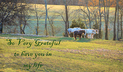 Photograph - So Very Grateful To Have You In My Life by Jan Amiss Photography