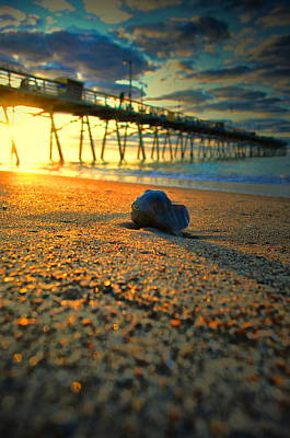 Photograph - Soaking Up The Sunrise by Emily Stauring