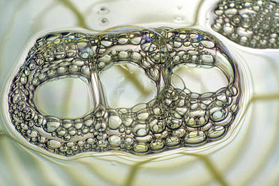 Soap Bubbles Print by Dr Keith Wheeler