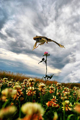 Photograph - Soar Above by Emily Stauring