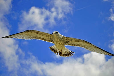 Photograph - Soaring Above by Gene Sherrill