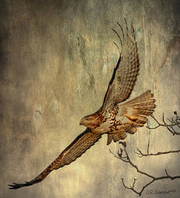 Red Tail Hawk Digital Art - Soaring by CR  Courson