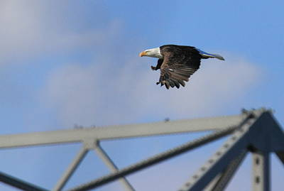 Photograph - Soaring by Coby Cooper