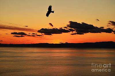 Photograph - Soaring by Dean Harte