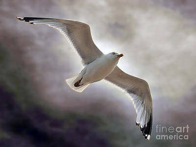 Soaring Art Print by Graham Taylor