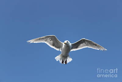 Photograph - Soaring High by Terri Thompson