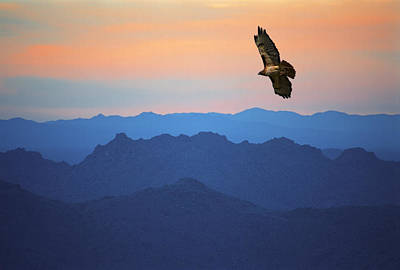 Soaring Hawk Photograph - Soaring Red Tailed Hawk At Sunset by Randall Nyhof