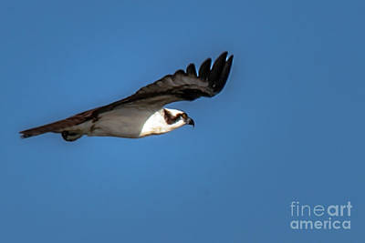 Photograph - Soaring by Robert Bales