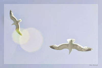 Photograph - Soaring Seagulls by Blake Richards