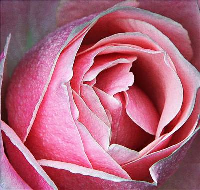 Digital Art - Soft And Pink by Carrie OBrien Sibley