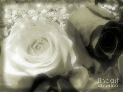 Photograph - Soft Beauty by Tammy Herrin